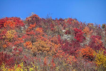 red trees and blue sky in autumn Zdjęcie Seryjne