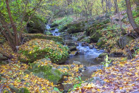 natural water stream in autumn forest Banco de Imagens