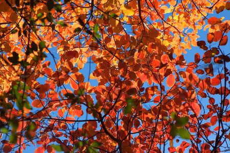 autumn natural background with red leaves Stockfoto