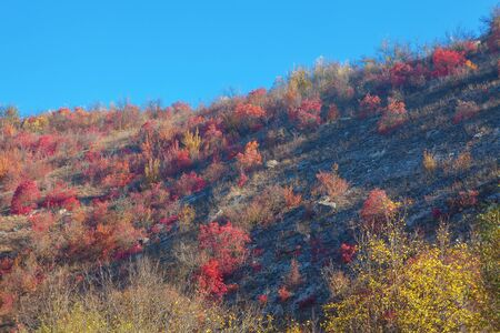 bushes with red leaves on the hill in the autumn