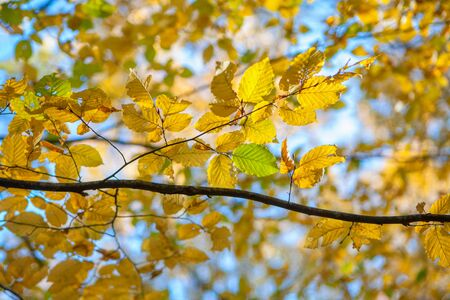 yellow leaves and branches in fall season