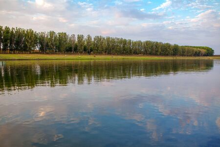 scenery with row of trees on the river shore