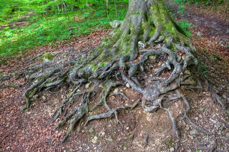 details of tree with twisted roots Banco de Imagens