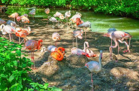 tropical park with flock of flamingo 版權商用圖片
