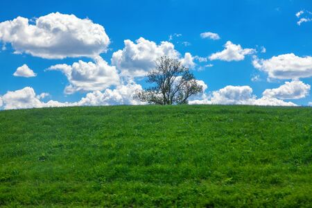 tree on the green hill and blue sky with clouds Banco de Imagens