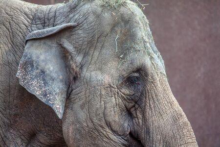 portrait in details of a sad elephant
