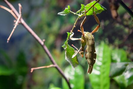 african insect hanging on the plant Banco de Imagens