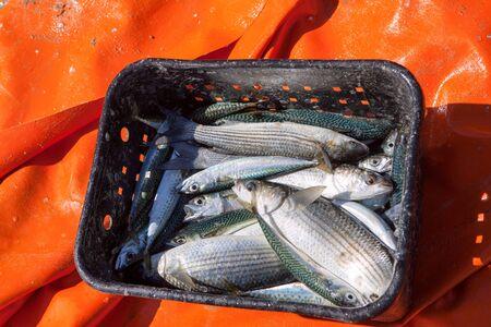 fresh fish in basket on the seaside Stok Fotoğraf - 129719108