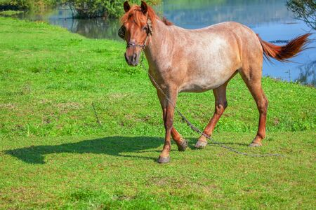 one domestic horse on the green meadow