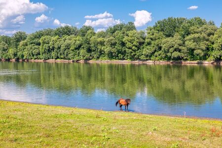 horse standing on the river shore Stock Photo