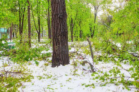 snow in urban park in the spring season