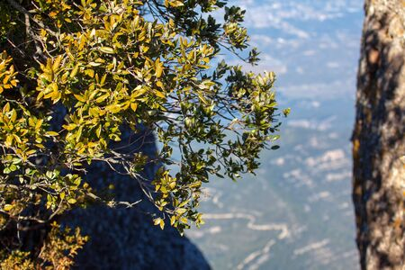 the tree grows in extreme conditions on the edge of the precipice