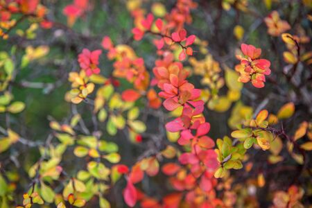 background of red and yellow leaves