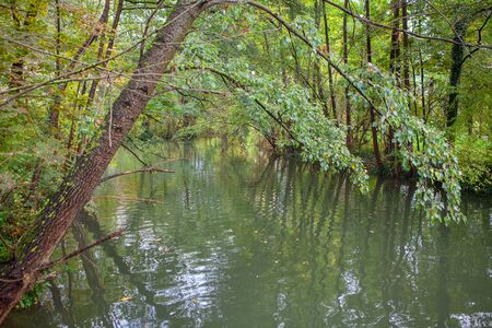 river scenery among green trees