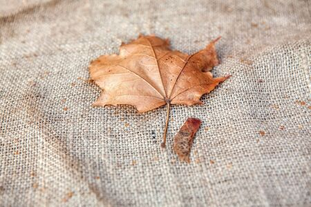 dry leaf on the sackcloth background