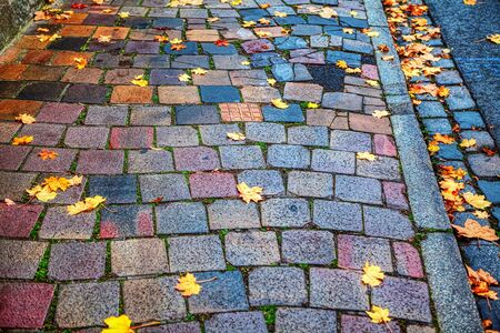 autumn colorful leaves on the pavement
