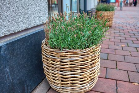 basket with decorative flowers on the street 스톡 콘텐츠