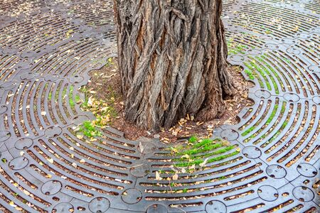 tree trunk in the city park 스톡 콘텐츠