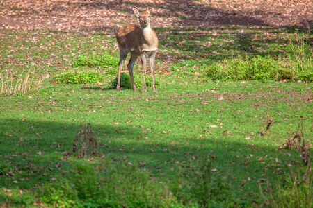 young deer on the green meadow 스톡 콘텐츠