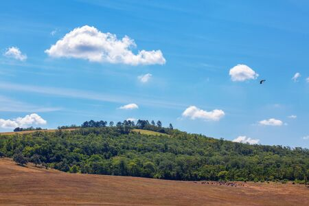 green hill and blue sky with white clouds