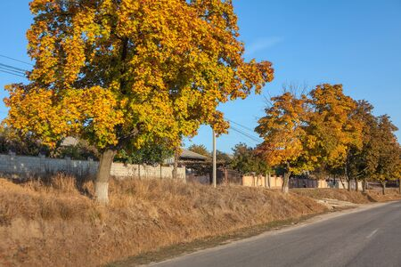 autumnal scene with asphalt road in the village