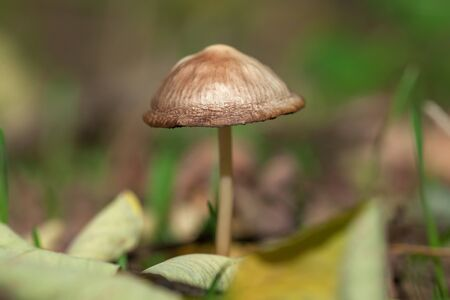 close up image of mushroom in the forest 스톡 콘텐츠