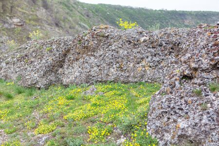 natural rocks and wild yellow flowers