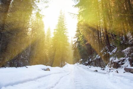 sun shining in the winter forest