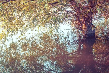 willow tree in flood water