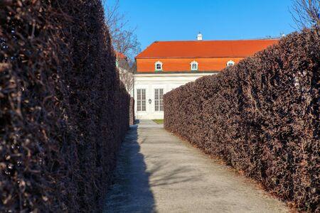walking path between decorative bushes in Belvedere gardens