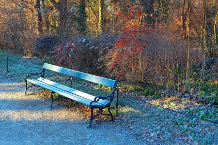 hoarfrost on the park bench in the winter morning
