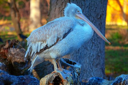 pelican standing on the logs on natural area