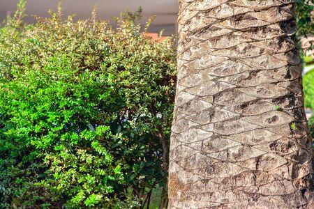 closeup of the palm tree trunk Фото со стока