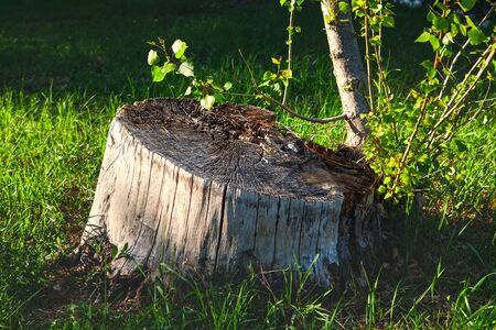 old tree stump in green grass Stok Fotoğraf