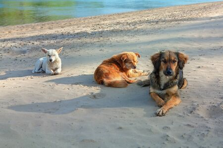 stray dogs lying at the river shore Stock fotó