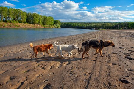 dogs walking together at the river shore