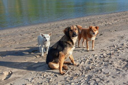 three dogs standing together at the riverside