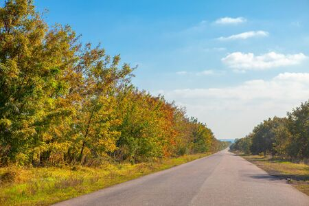 driving at asphalt road in the autumn Imagens