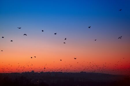 flock of crows flying over the city in the twilight