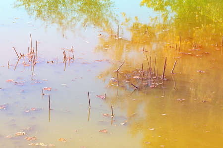 Wetland Environment . Swamp Water Surface . Nature Reflection in the Morass