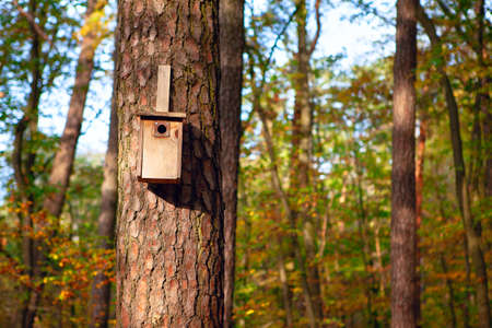 Birdhouse on a pine tree . Coniferous forest with nesting box in the autumn