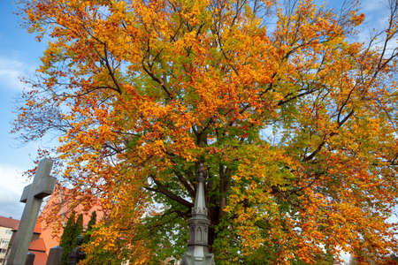 Colorful Tree in the Cemetery . Graveyard in the Fall 写真素材