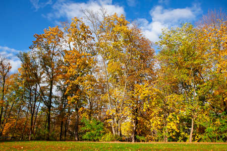 Autumn trees with yellow foliage . Colorful park scenery 写真素材