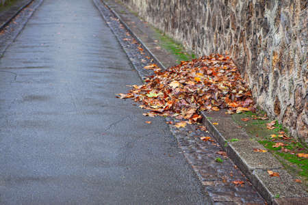 Pile of Dry Leaves at the Street . Rainy Autumn Weather