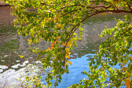 Hanging autumnal branches over the water . Scenery with autumn leaves 写真素材