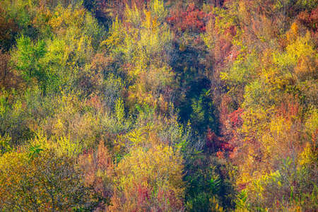 Autumn Nature with Colorful Tree Tops. Aerial View of forest in the fall Stok Fotoğraf