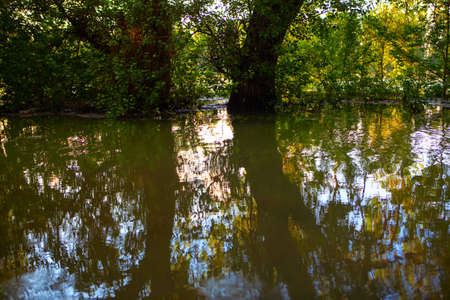 Flood in the forest . Nature after torrential rain Stok Fotoğraf - 155176921