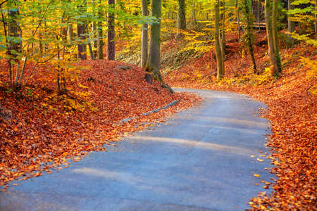 Walking in the golden park . Footpath in the autumn park Stok Fotoğraf - 154843641