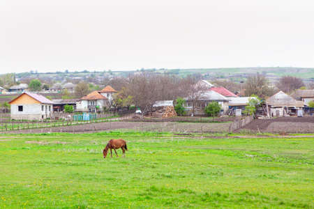 Village with grazing horse on the meadow