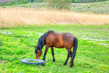 Horse and tyre on the green meadow Stok Fotoğraf - 155049962
